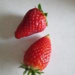 Jahody = očista organizmu + recept na jahodovú penu
