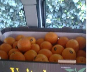skladovanie pomaranča
