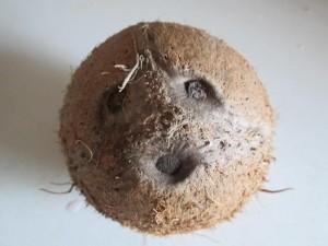 ako rozbiť kokos