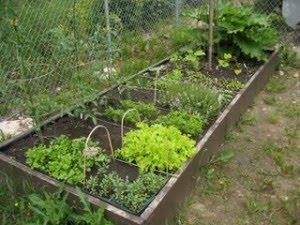mala zeleninova zahradka