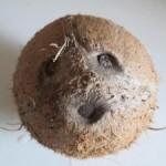 Kokosový olej má blahodárne účinky
