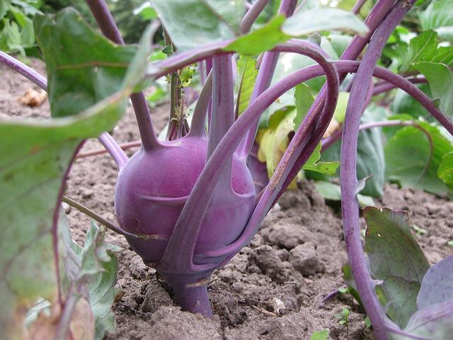 pestovanie kalerabu, zdravie, recepty