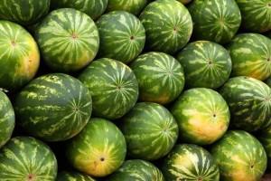 ako nakupovat melon