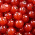 Ríbezle – pestovanie a recepty