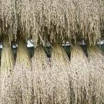 Jazmínová ryža s príjemnou vôňou, ktorá v sebe skrýva veľa pozitívnych účinkov