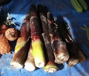 bambusové výhonky pre zdravie recepty